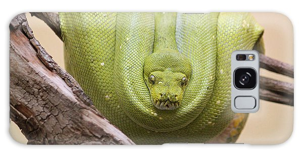 Green Tree Python Galaxy Case by Suzanne Gaff