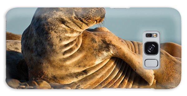 Grey Seal Halichoerus Grypus Watching Galaxy Case by Gabor Pozsgai