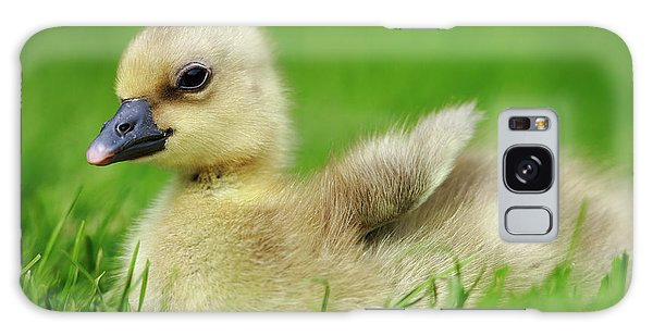 Gosling Galaxy Case - Greylag Goose Anser Anser Gosling by Cyril Ruoso