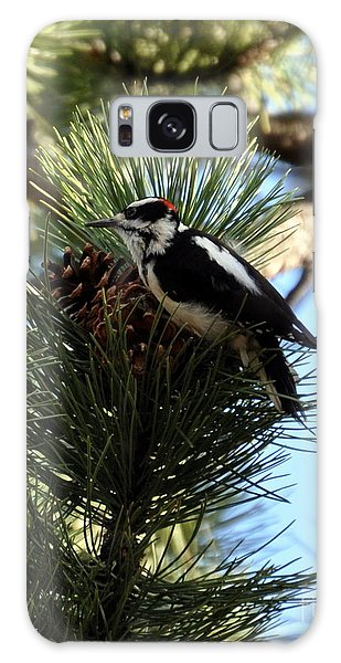 Hairy Woodpecker On Pine Cone Galaxy Case