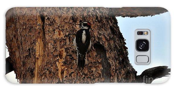 Hairy Woodpecker On Pine Tree Galaxy Case