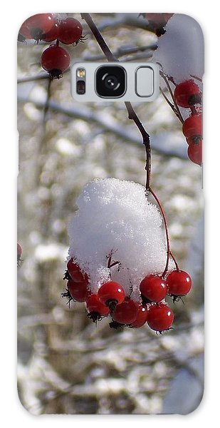 Hawthorn Berries In The Snow Galaxy Case by Peter Mooyman