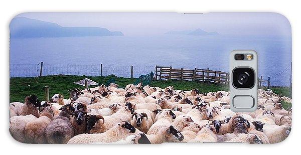 Sheep Galaxy Case - Herding Sheep, Inishtooskert, Blasket by The Irish Image Collection