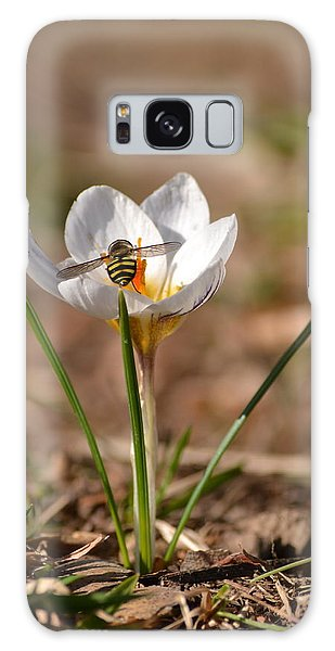 Hoverfly Visitng A Crocus Galaxy Case