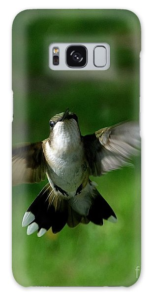 Hovering Hummingbird  Galaxy Case