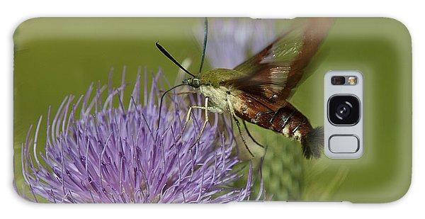 Hummingbird Or Clearwing Moth Din178 Galaxy Case by Gerry Gantt