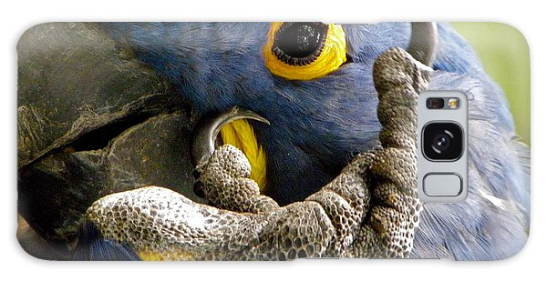 Hyacinth Macaw Galaxy Case