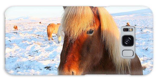 Icelandic Horse Galaxy Case