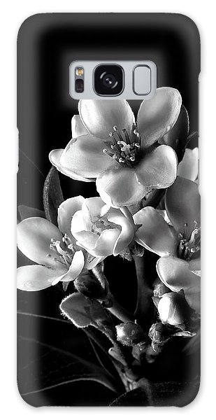 Indian Hawthorn In Black And White Galaxy Case