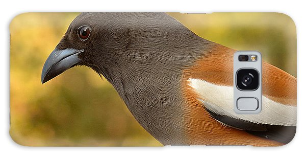 Indian Treepie. A Portrait. Galaxy Case by Fotosas Photography