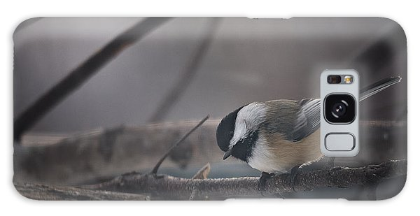 Chickadee Galaxy S8 Case - Inquisitive by Susan Capuano