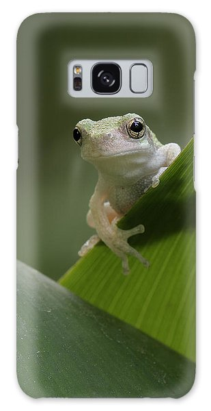 Juvenile Grey Treefrog Galaxy Case