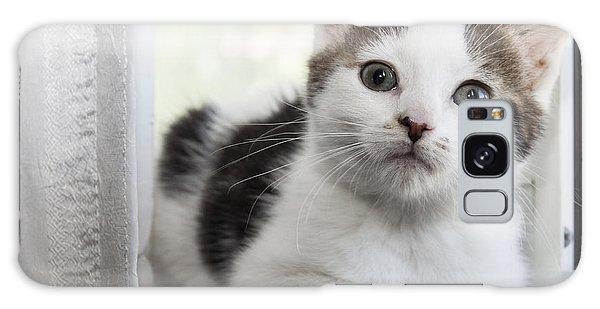 Kitten In The Window Galaxy Case