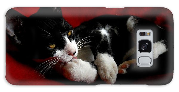Kitten On Red Take Two Galaxy Case by Maggy Marsh