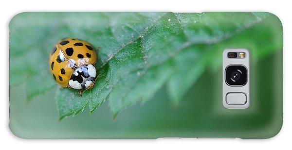 Ladybug Posing On Astilbe Leaf Galaxy Case
