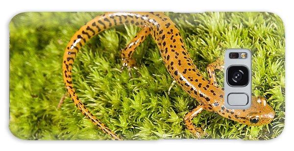 Longtail Salamander Eurycea Longicauda Galaxy Case