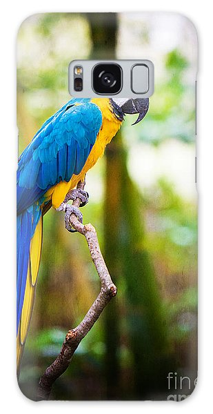 Macaw Galaxy Case - Macaw by Joan McCool