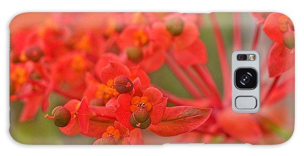 Macro Euphorbia Fireglow Plant Galaxy Case by Valerie Garner