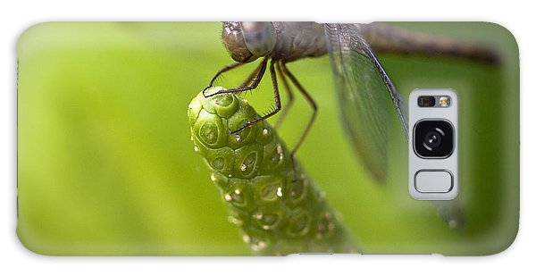 Macro Of A Dragonfly - Focus Stacked Image Galaxy Case
