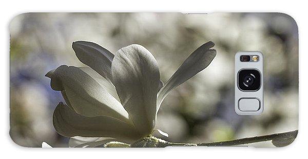Magnolia X Loebneri  Merrill. Galaxy Case