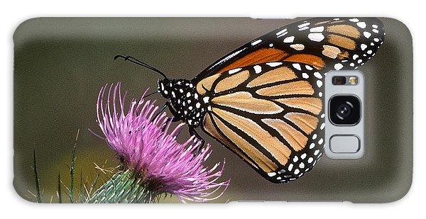 Monarch Butterfly On Thistle 13a Galaxy Case by Gerry Gantt