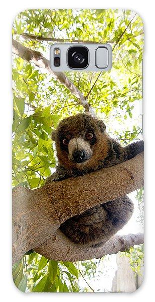 Mongoose Lemur Galaxy Case