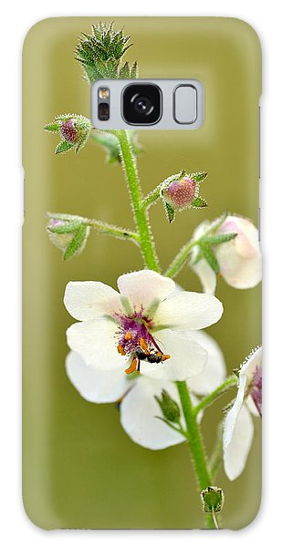 Moth Mullein Galaxy Case by JD Grimes
