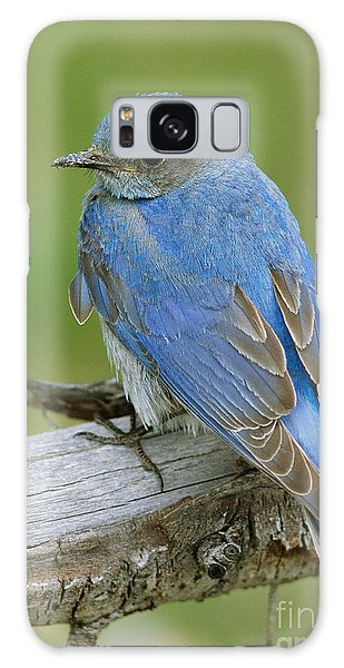 Mountain Bluebird Galaxy Case