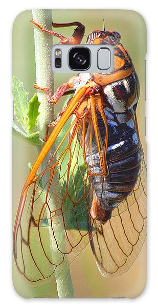 Noisy Cicada Galaxy Case