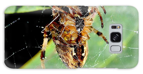 Orb Weaver Waits Galaxy Case