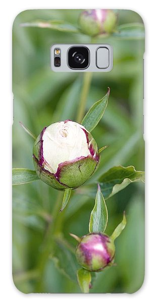 Paeonia Lactiflora 'shirley Temple' Galaxy Case