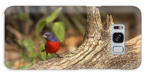 Painted Bunting On Log Galaxy Case by Anne Rodkin