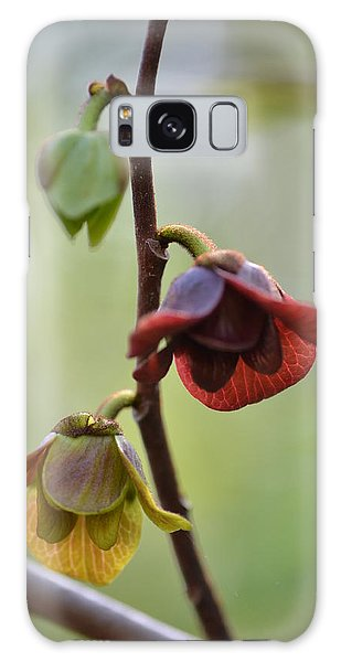 Paw-paw Flowers Galaxy Case