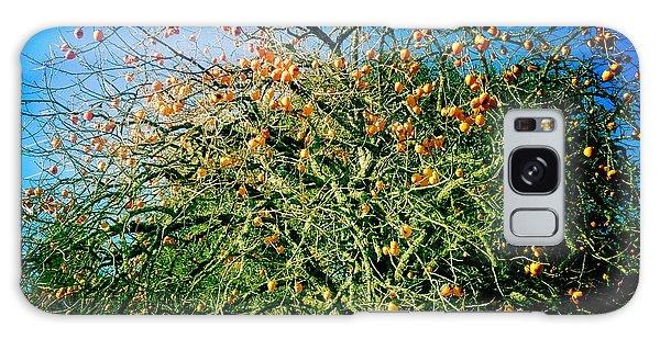 Persimmon Tree Galaxy Case
