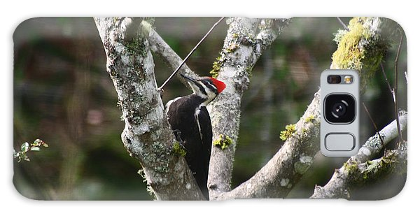 Pileated Woodpecker In Cherry Tree Galaxy Case by Kym Backland