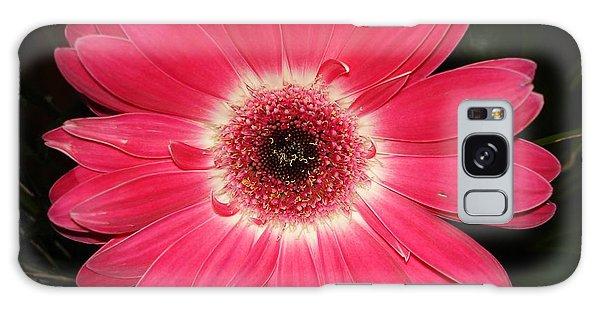 Pink Gerbera Daisy Galaxy Case