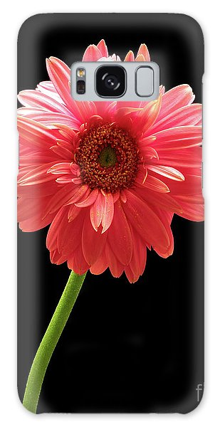 Pink Gerbera Galaxy Case