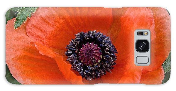 Poppy II Galaxy Case by Michael Friedman