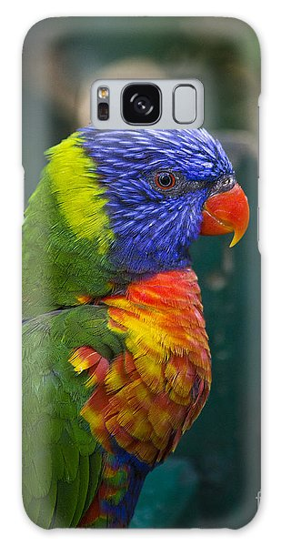Posing Rainbow Lorikeet. Galaxy Case