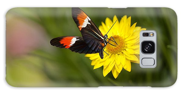 Postman Butterfly On Yellow Straw Flower Galaxy Case