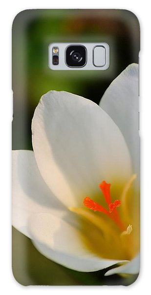 Pretty White Crocus Galaxy Case
