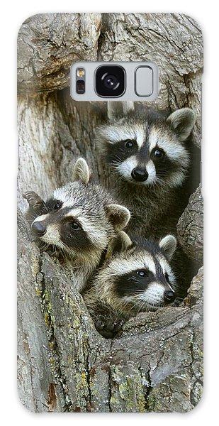 Raccoons Peeking Out Galaxy Case by Myrna Bradshaw