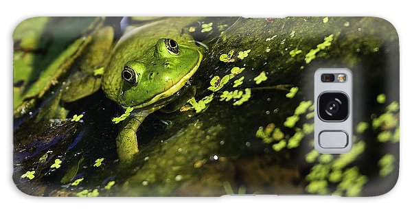 Rana Clamitans Or Green Frog Galaxy Case