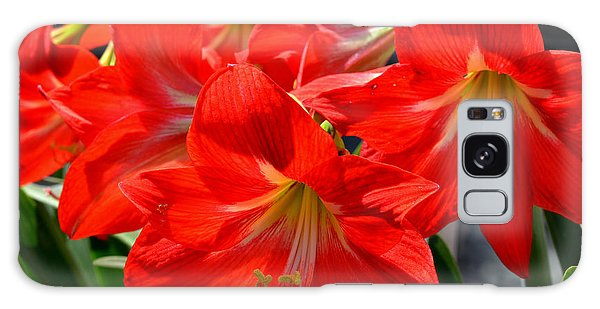 Red Amaryllis Flowers Galaxy Case