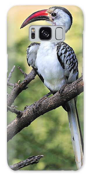 Red-billed Hornbill Galaxy Case by Tony Beck