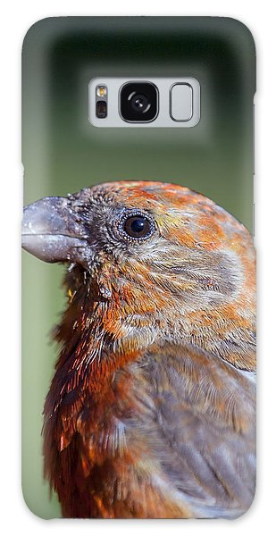 Red Crossbill Galaxy Case