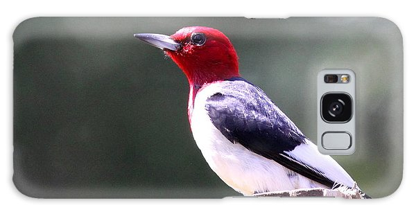 Red-headed Woodpecker - Statue Galaxy Case
