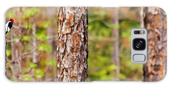 Red Headed Woodpecker On The Pine Savanna Galaxy Case