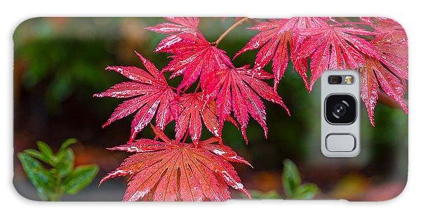 Red Maple Season Galaxy Case by Ken Stanback