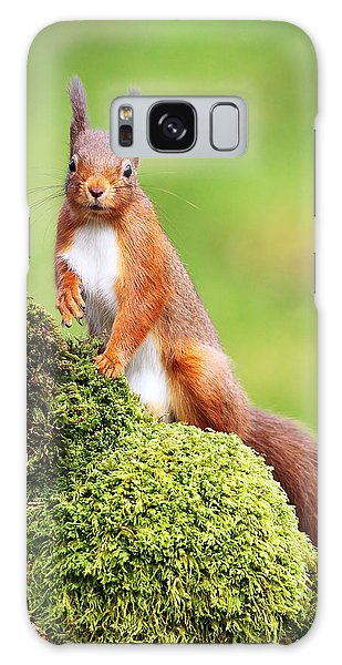 Red Squirrel Galaxy Case